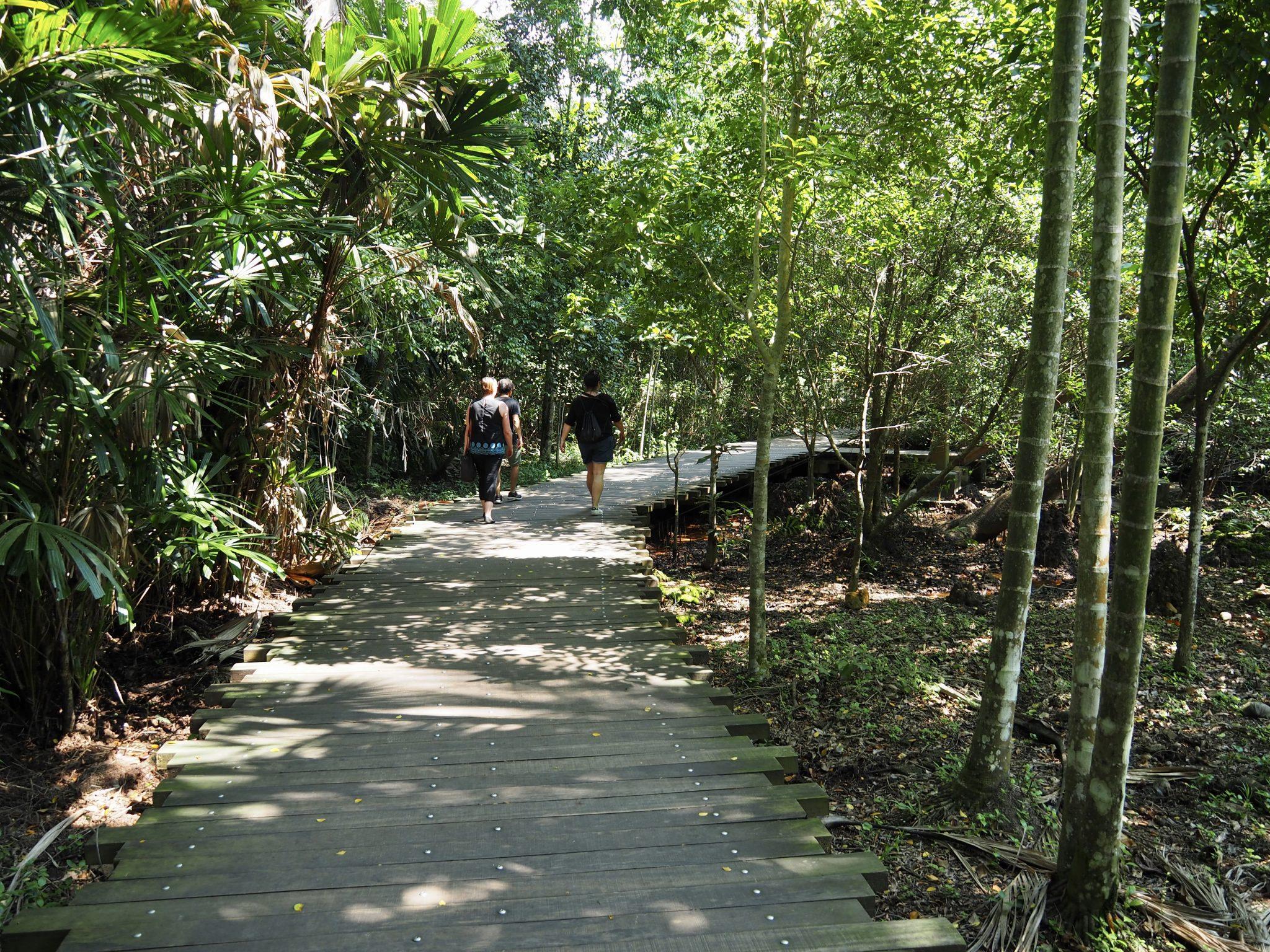 Chek Jawa Wetlands