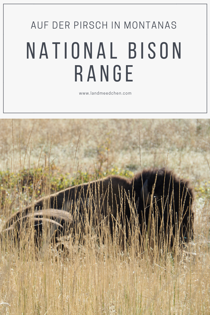 Pinterest National Bison Range