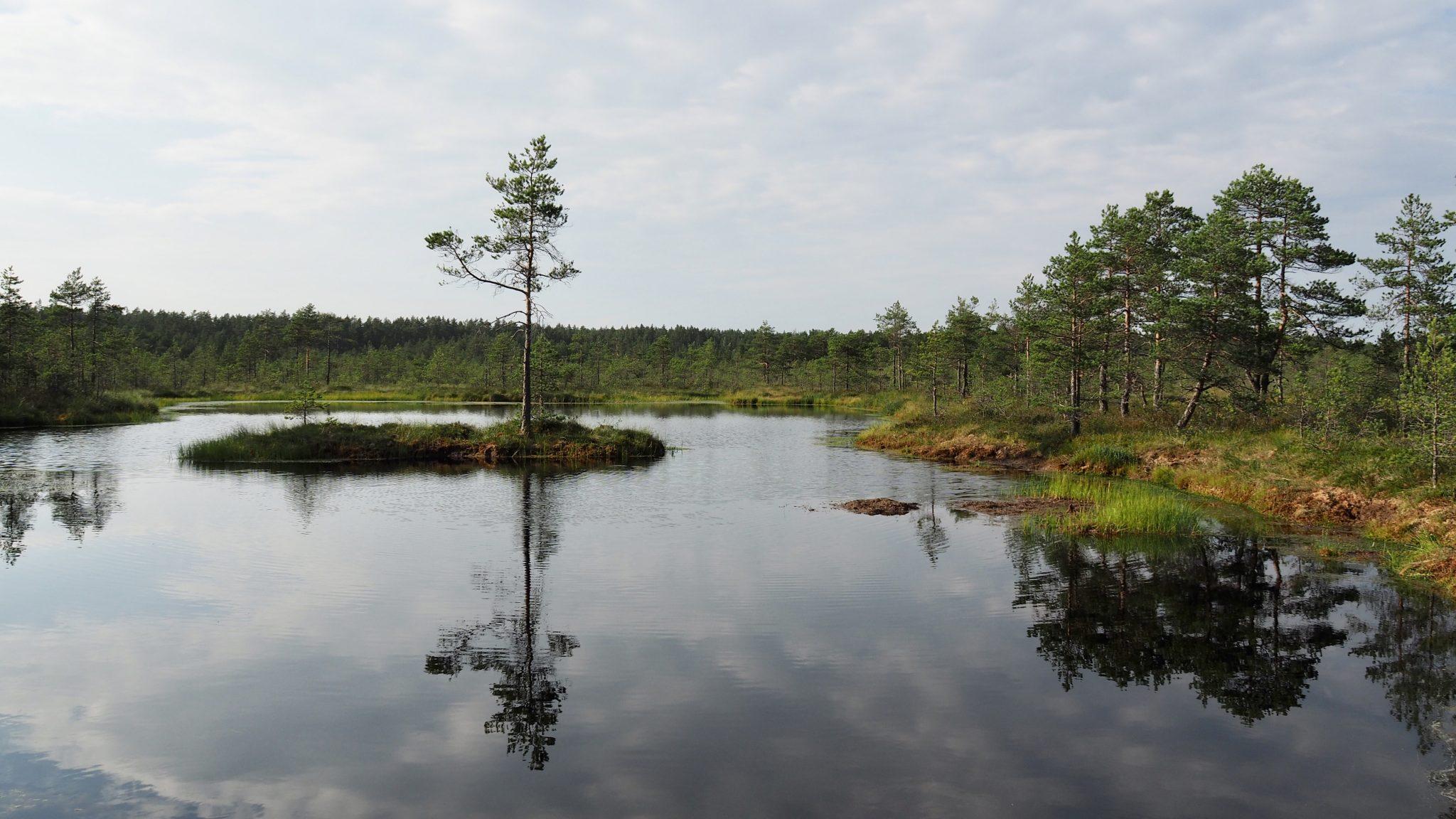 Viru Bog Estonia