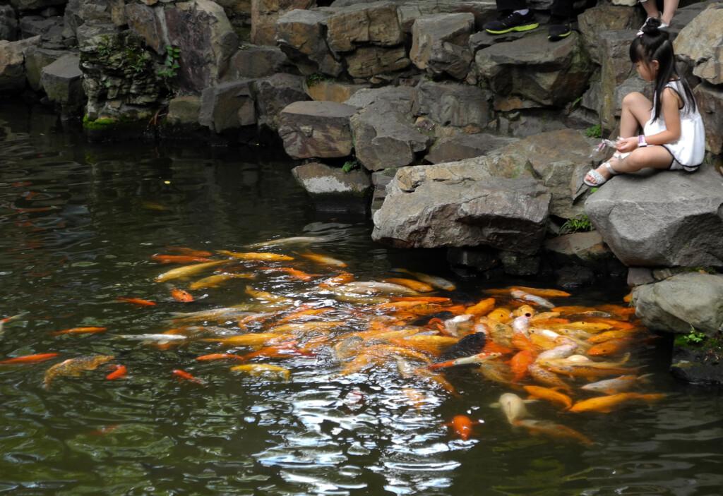 Koi Teich Yu Garten Shanghai