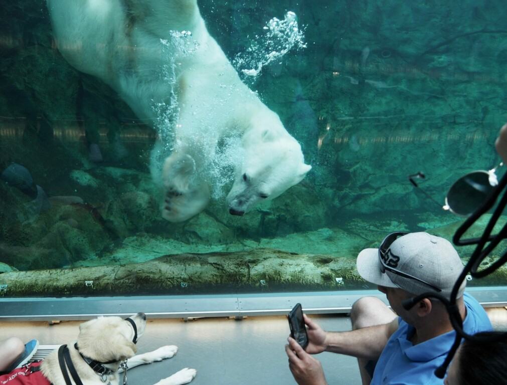 journey to churchill Winnipeg zoo Manitoba kanada
