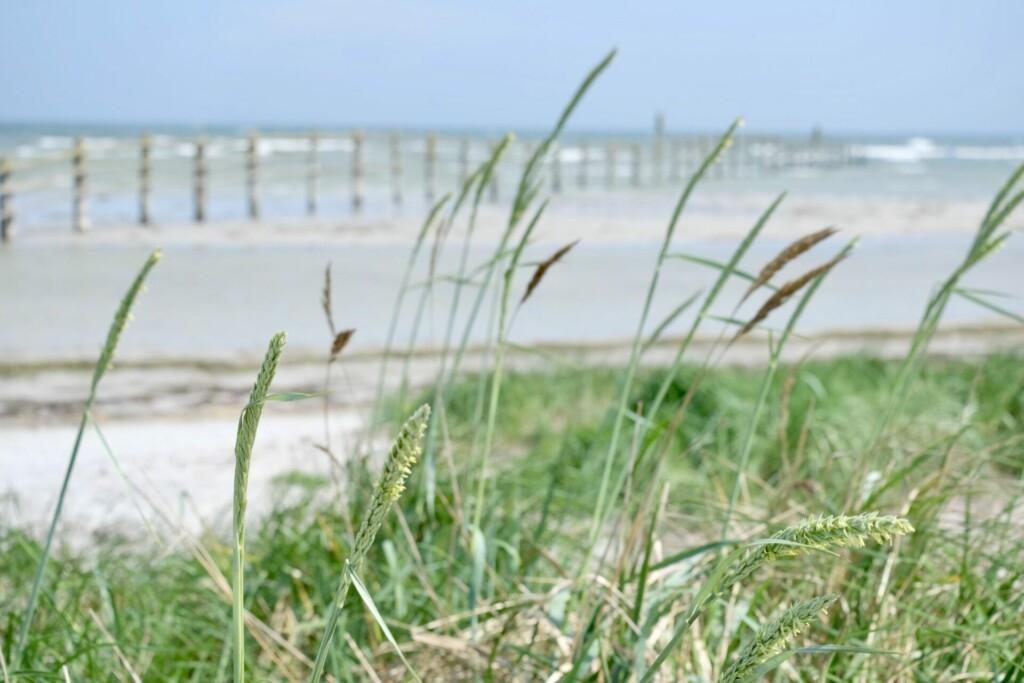 Darß Ostsee