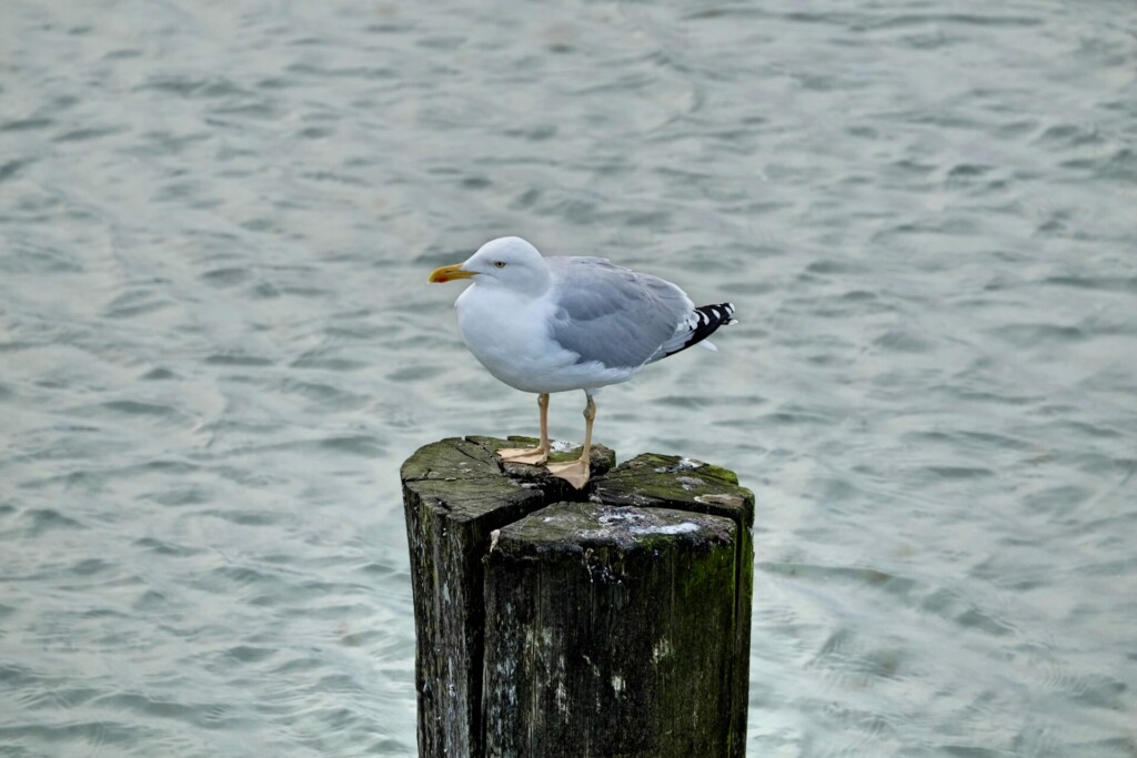 Zingst Strand Ostsee
