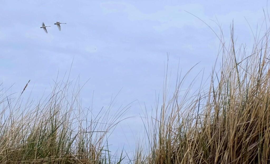Sundische Wiesen Darß Ostsee
