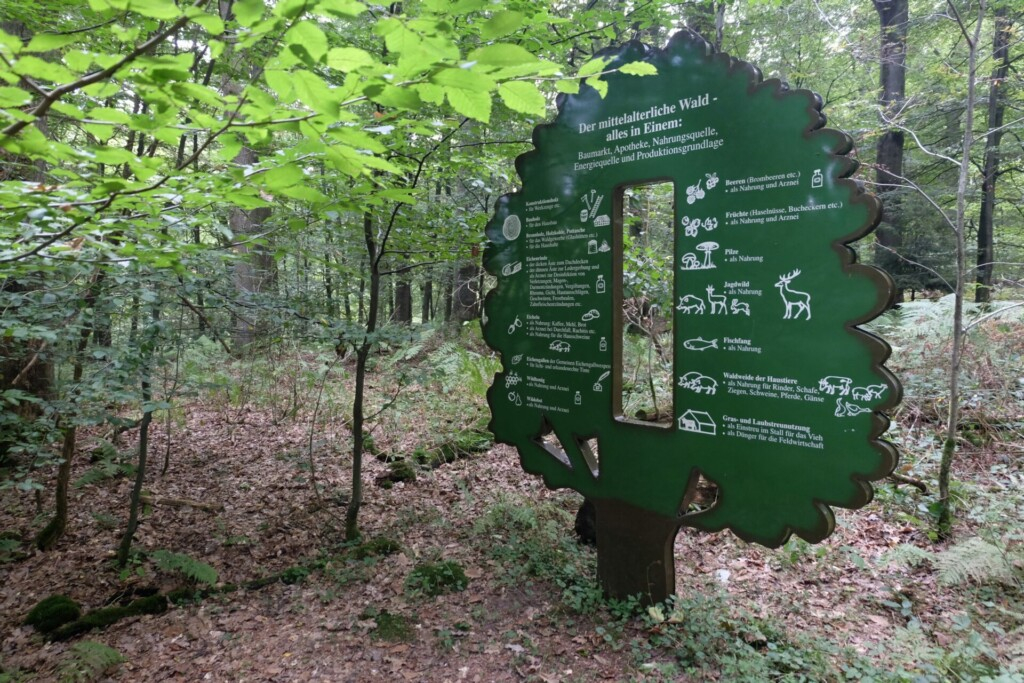 Hutewald Projekt Weserbergland