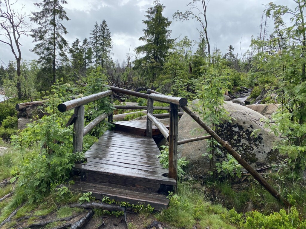 Oderteich Harz