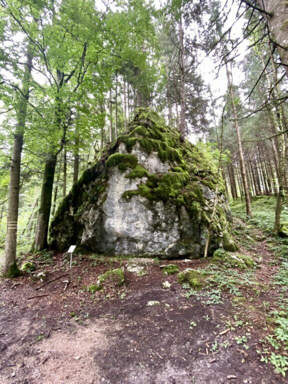 Kräuterwiese Samerberg Chiemsee Alpenland