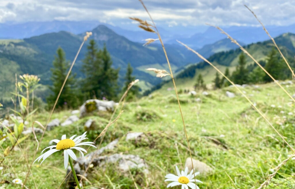 Hochries Gipfel Samerberg Chiemsee Alpenland