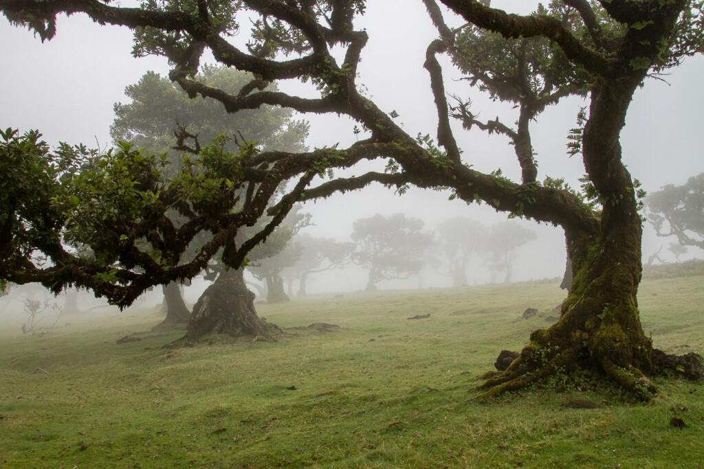 Laurel Forest Madeira