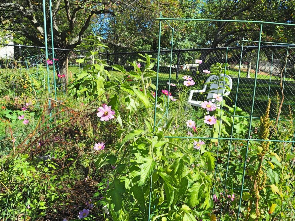 Neighbourhood Gardening Boston