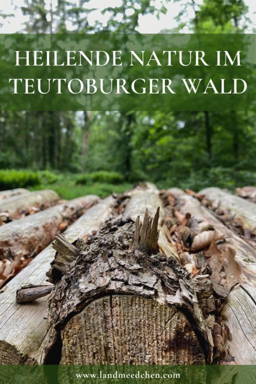 Heilende Natur im Teutoburger Wald Pinterest